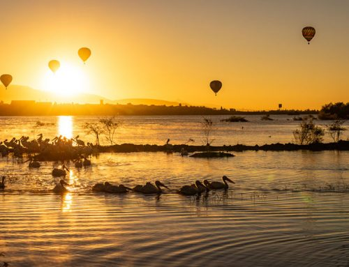 Over 200 balloons rise with the sun, entertaining thousands at famous festival